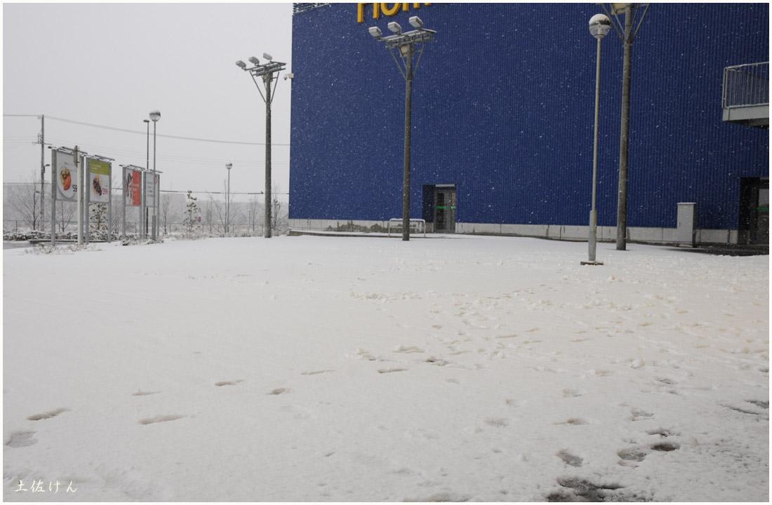 大阪の雪5