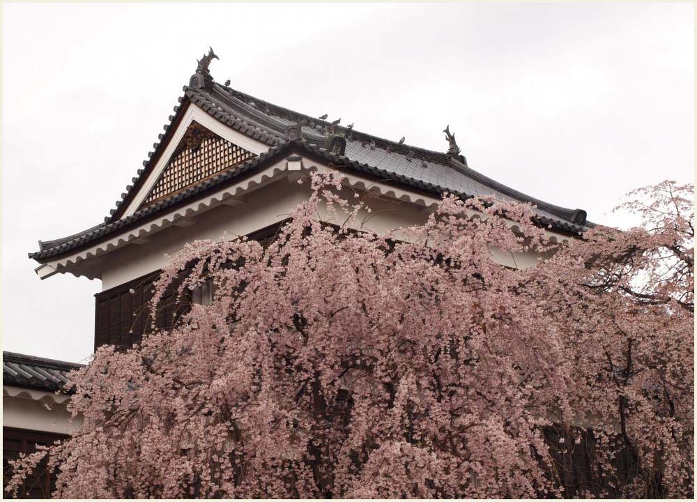 枝垂れ桜と東虎口櫓門