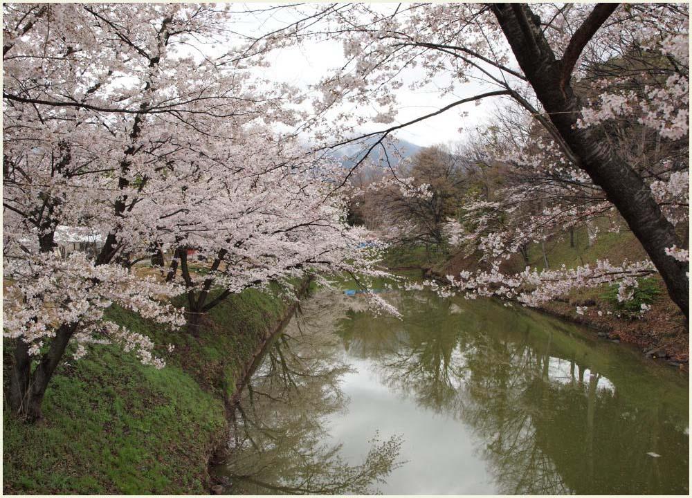 堀に写る桜1