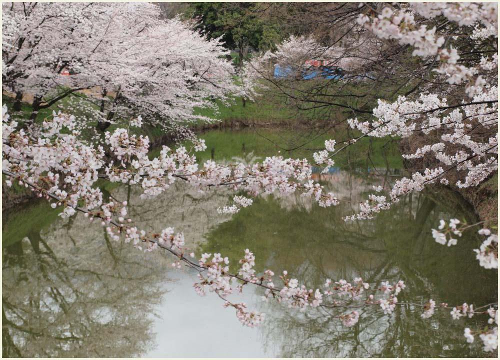 堀に写る桜2
