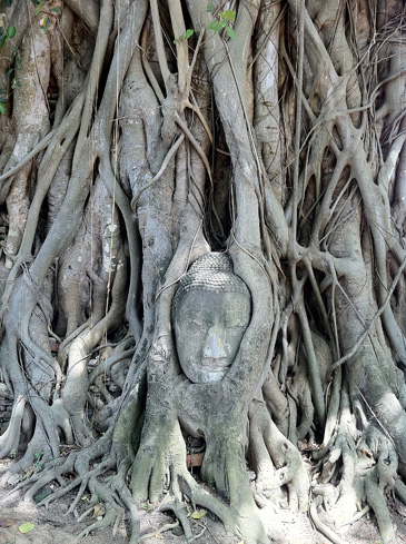ワットプラマハータート仏像頭部