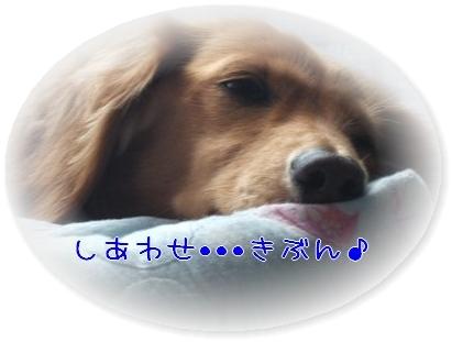 PHOTO 1009283