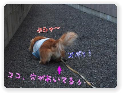 Photo1006056.jpg