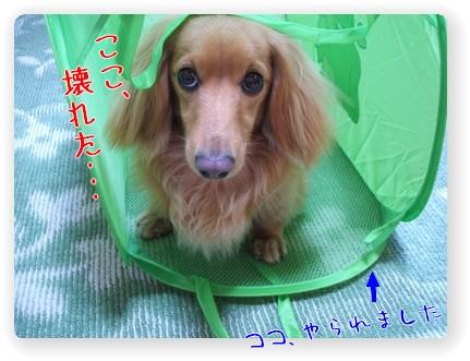 Photo1006083.jpg