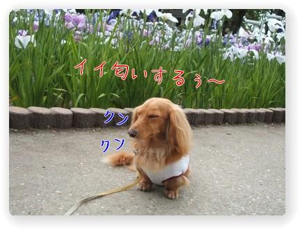 Photo1006093.jpg