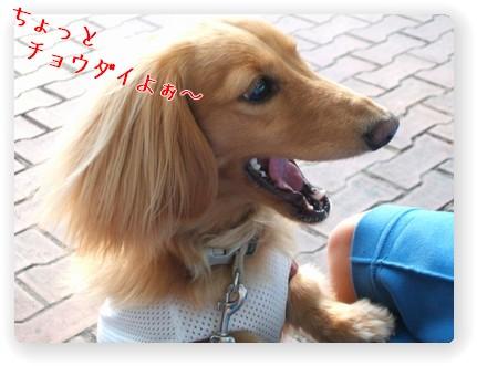 Photo1006095.jpg