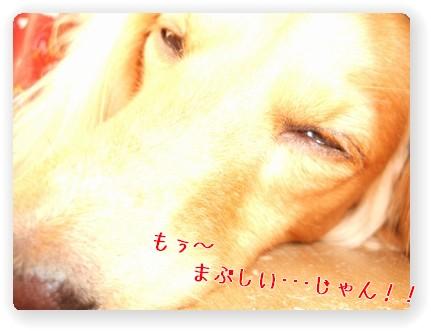 Photo1006113.jpg