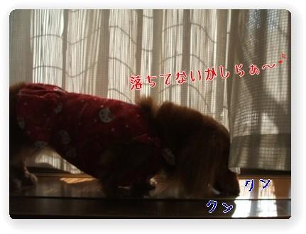 Photo1006166.jpg
