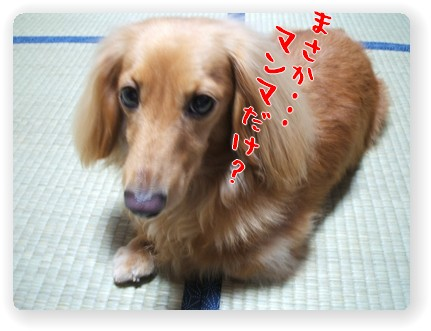 Photo1006282.jpg