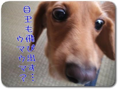Photo1008103.jpg