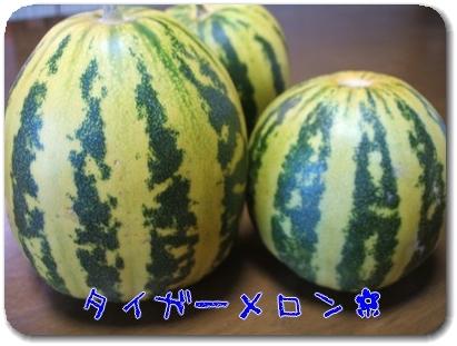 Photo1008104_20100810204816.jpg