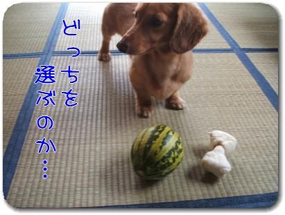 Photo1008105.jpg