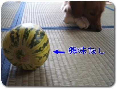 Photo1008106.jpg
