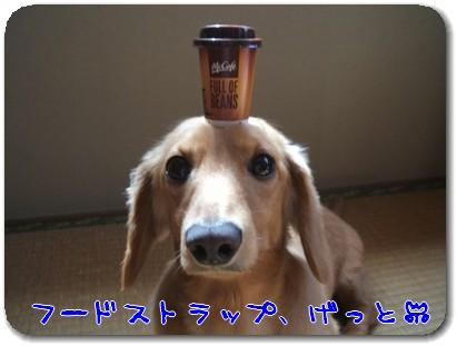 Photo1008114.jpg