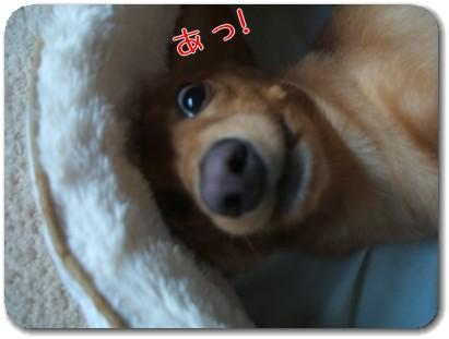 Photo1008173.jpg