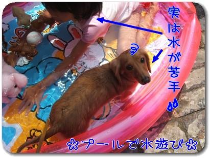 Photo1008261.jpg