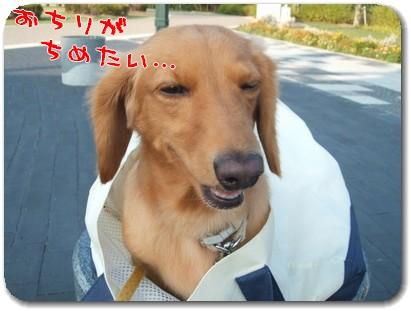Photo1008276.jpg