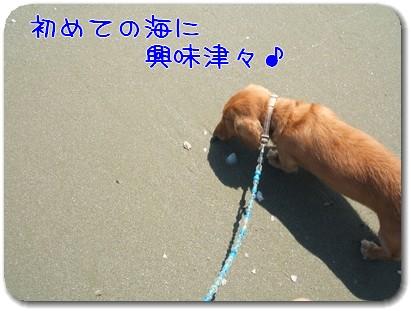 Photo1009062_20100906213531.jpg