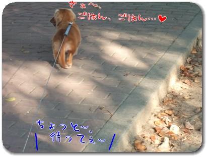 Photo1009075.jpg