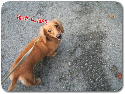 Photo1009161.jpg