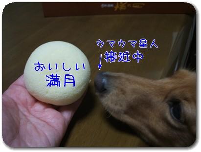 Photo1009203.jpg