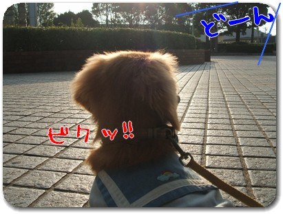 Photo1010035.jpg