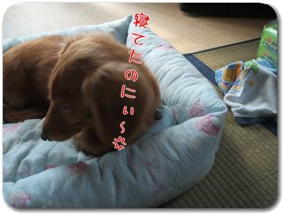 Photo1010052.jpg