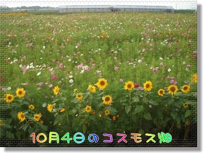 Photo1010152.jpg