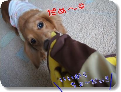 Photo1010244.jpg