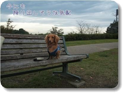 Photo1010261.jpg