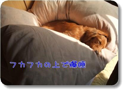 Photo1011091.jpg