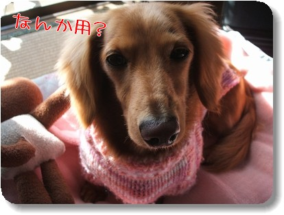 Photo10111283.jpg