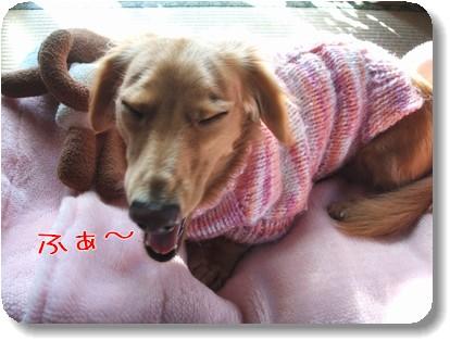 Photo10111284.jpg