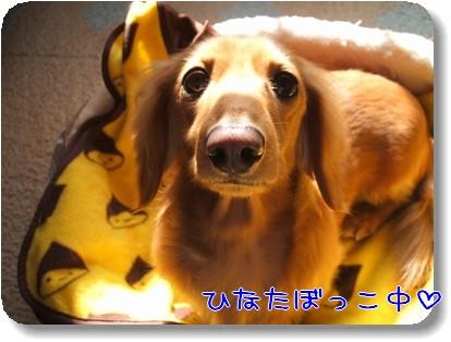 Photo1011161.jpg
