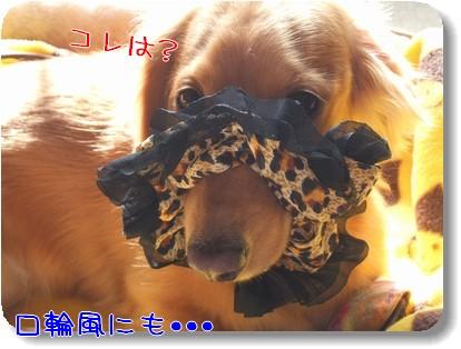 Photo1011165.jpg
