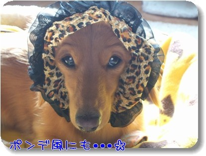 Photo1011166.jpg