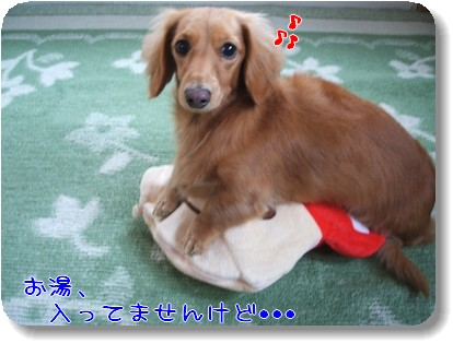 Photo1011173.jpg