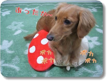 Photo1011174.jpg