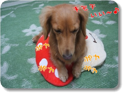 Photo1011175.jpg