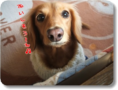 Photo1011193.jpg