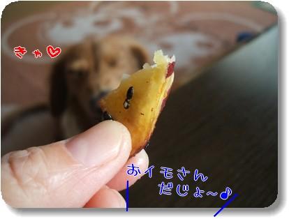 Photo1011194.jpg