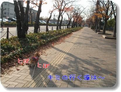 Photo1012041.jpg