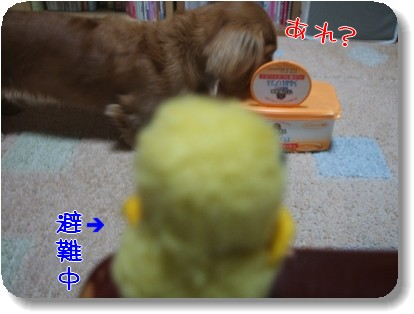 Photo1012285.jpg