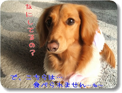 Photo1012293.jpg