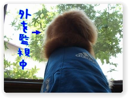 photo1006292.jpg