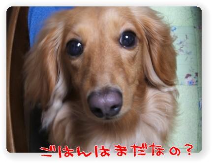 photo1007076.jpg
