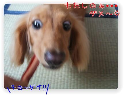 photo10071135.jpg