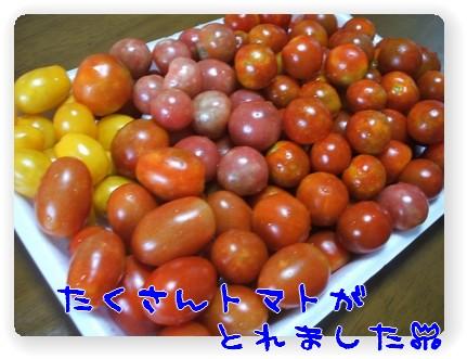photo10071141.jpg