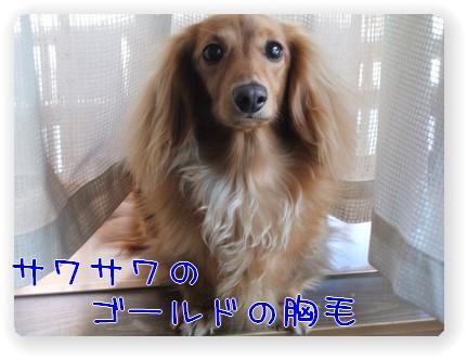 photo1007243.jpg