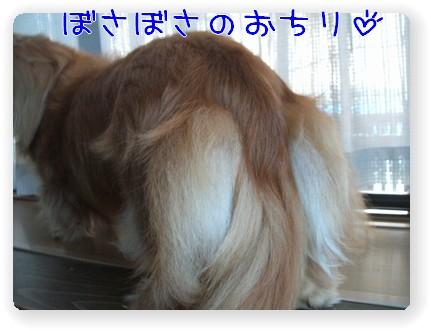 photo1007244.jpg